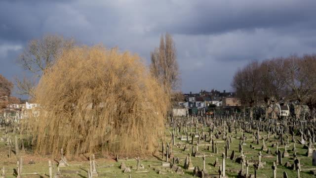 time lapse graveyard - trauerweide stock-videos und b-roll-filmmaterial