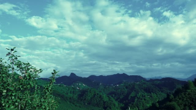 time lapse green forest landscape and clouds - backwater stock videos & royalty-free footage