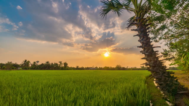 4K Time lapse : Green rice field and beautiful sunset at Chiang mai, Thailand.