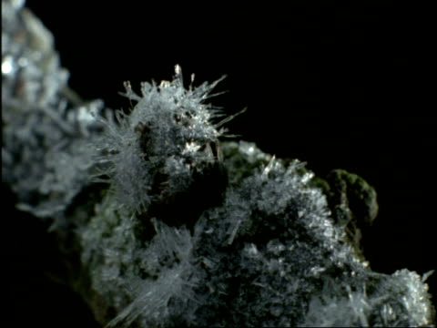 Time lapse - Ice crystals forming on tree branch, UK