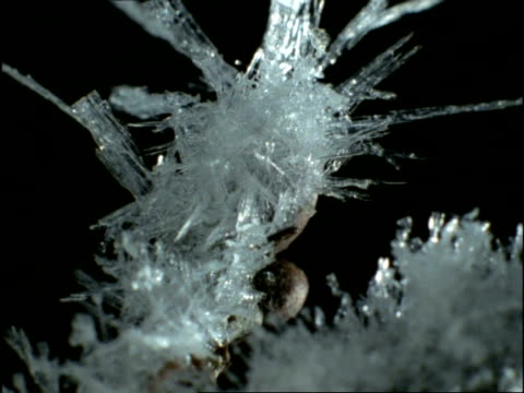 vídeos y material grabado en eventos de stock de time lapse - ice crystals forming on tree branch, uk - cristal de hielo