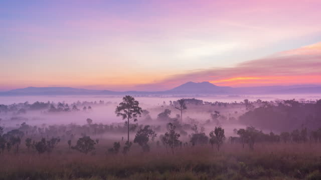 4k time lapse : in the morning meadow pine forest at thung salaeng luang national park, phitsanulok province, thailand - beauty in nature stock videos & royalty-free footage
