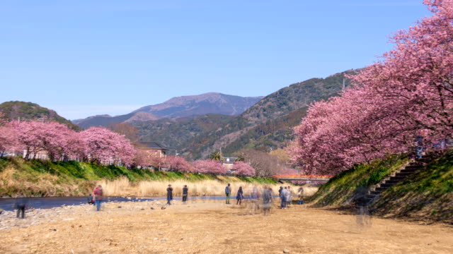 4k time lapse: kawazu-zakura cherry blossoms - satoyama scenery stock videos and b-roll footage