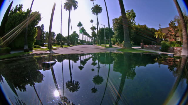 Time lapse long shot car point of view driving along palm tree-lined Beverly Hills street / Los Angeles, California