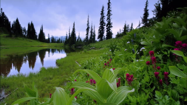time lapse long shot wildflowers near lake with trees in background / day to dusk / mt. rainier nat'l park, washington - day to dusk stock videos & royalty-free footage
