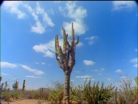 time lapse low angle clouds moving over cacti in desert / Baja California, Mexico