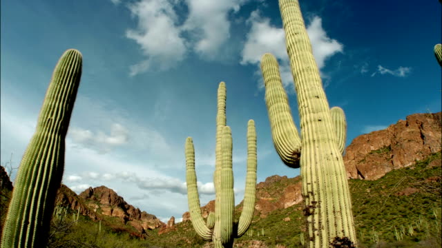Time lapse low angle pan clouds passing over cactus in the Saguaro National Park / Arizona