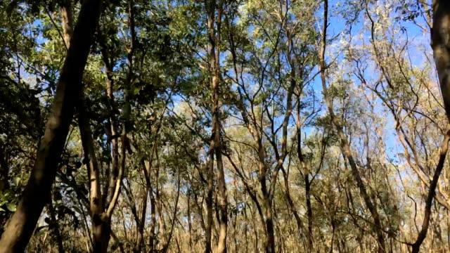 time lapse mangrove tree - ecoturismo video stock e b–roll