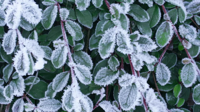 time lapse medium shot frost thawing on leaves / melting / dripping - le quattro stagioni video stock e b–roll