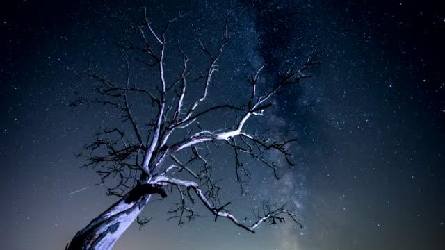 時間の経過 - 天の川ツリー - landscape scenery点の映像素材/bロール