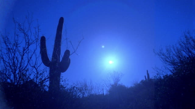 time lapse moonrise in clear night sky over silhouette desert + cactus / arizona - cactus silhouette stock videos & royalty-free footage