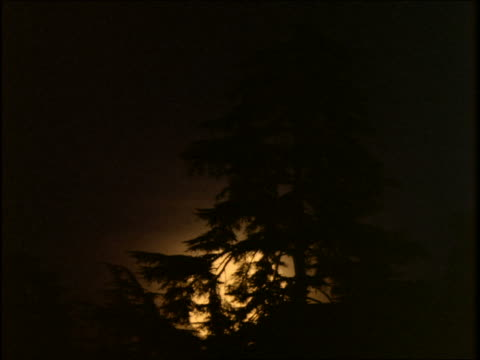 time lapse moonrise with silhouette of trees in foreground - pinaceae stock videos & royalty-free footage