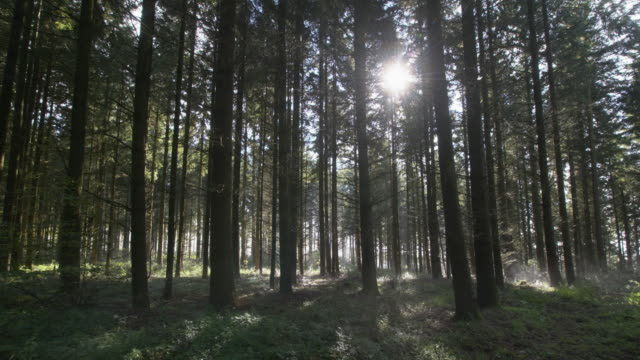 time lapse. moving fog in forest with sun and sunbeams. cochem, cochem-zell, rhineland-palatinate, germany. - fantasiewelt stock-videos und b-roll-filmmaterial