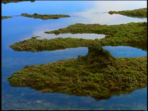 time lapse ocean tide rising over moss-covered rocks - gezeitentümpel stock-videos und b-roll-filmmaterial