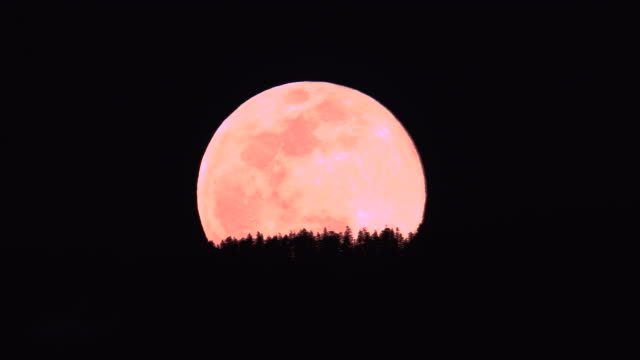 time lapse of a super moon pink moon full moon time rising over mountain with trees in foreground - pink colour stock videos & royalty-free footage