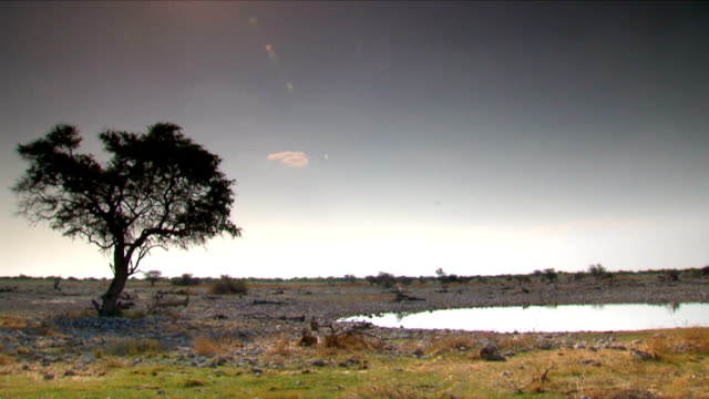 Time lapse of a waterhole/ Etosha National Park/ South Africa