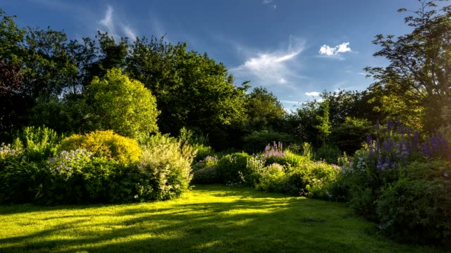 time lapse of an english garden in summer - flowerbed stock videos & royalty-free footage