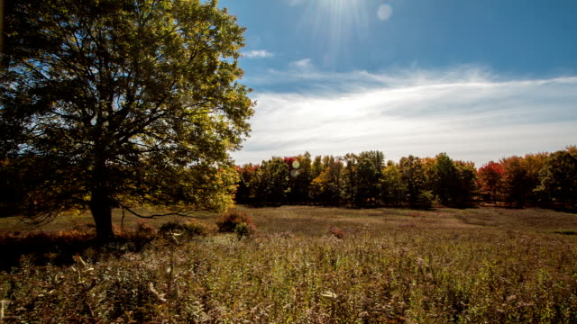 time lapse of autumn clouds in golden field - treelined stock videos & royalty-free footage