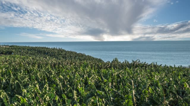 Time lapse of banana farm