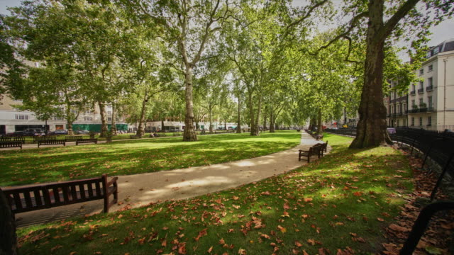 a time lapse of berkeley square and the plane trees - city life stock videos & royalty-free footage