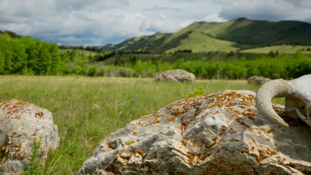 zeitraffer von rinderschädel und wolken western-konzept - graspflanze stock-videos und b-roll-filmmaterial