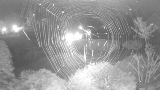 Time lapse of CCTV camera view of spider web at night
