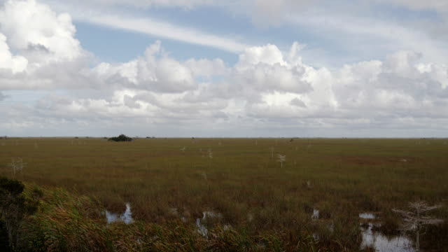 time lapse of cloud shadows moving over sawgrass prairies in the everglades, florida, usa - ökotourismus stock-videos und b-roll-filmmaterial