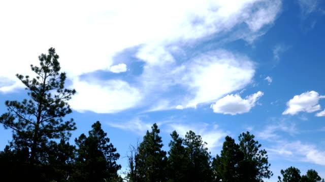 zeitraffer der wolken wogende über pinien in colorado - ländliches motiv stock-videos und b-roll-filmmaterial