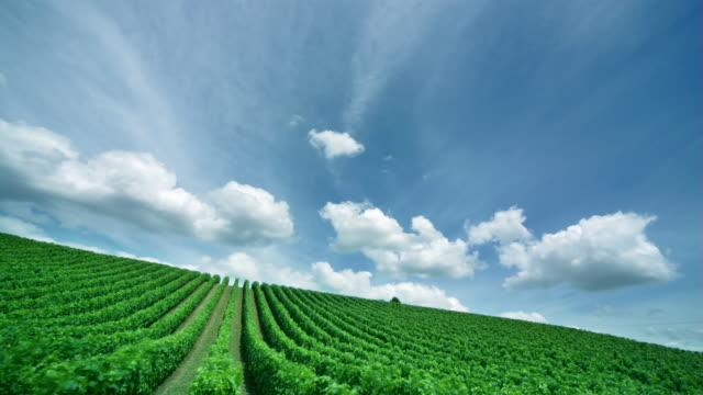 vídeos y material grabado en eventos de stock de time lapse of clouds drifting over vineyard / matakana, new zealand - vista inclinada