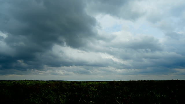 Time lapse (X50) of clouds over flooded prairie with floating vegetation moving
