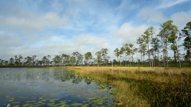 time lapse of clouds over lily pad - covered forest lake - florida us state stock videos & royalty-free footage