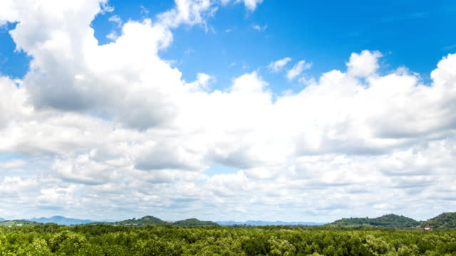 Time lapse of cloudy in the sky over the mangrove forest