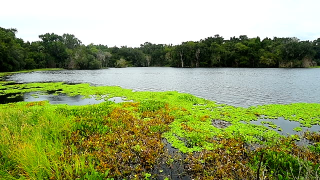 time lapse of continuous mat of water lettuce floating towards sinkhole on flooded prairie - state park stock videos & royalty-free footage