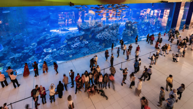 tl/ time lapse of dubai aquarium, situated inside dubai mall, busy with visitors - martin luther: his life and time stock videos & royalty-free footage