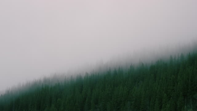 time lapse of fog in forest - land stock videos & royalty-free footage