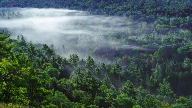 time lapse of fog che si muove attraverso la valle - valle video stock e b–roll