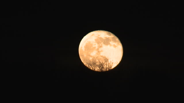 time lapse of full moon rising on halloween day - halloween stock-videos und b-roll-filmmaterial
