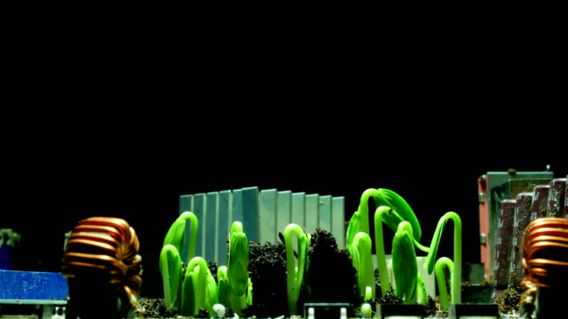 time lapse of germinating seeds on technology.save natureconcept