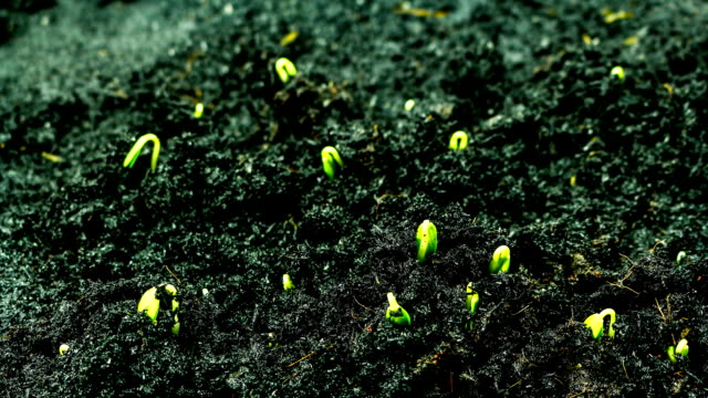 vídeos de stock e filmes b-roll de time lapse of germinating - solo