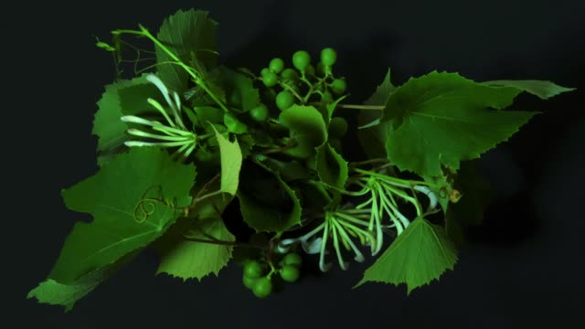 time lapse of green plants - vine stock videos & royalty-free footage