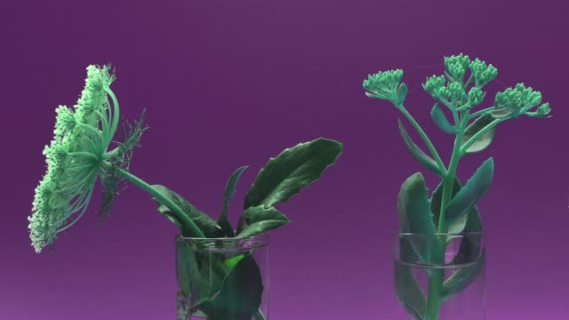 time lapse of green plants - two objects stock videos & royalty-free footage