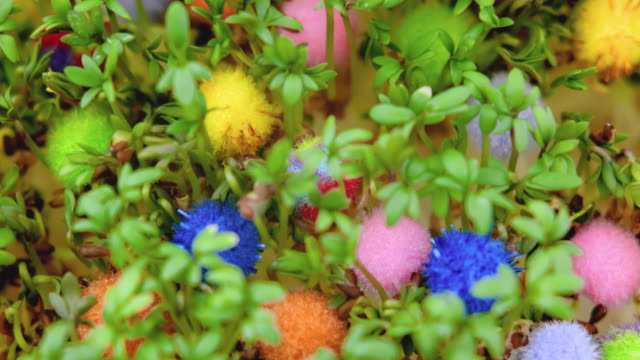 Time lapse of growing cress among colored balls