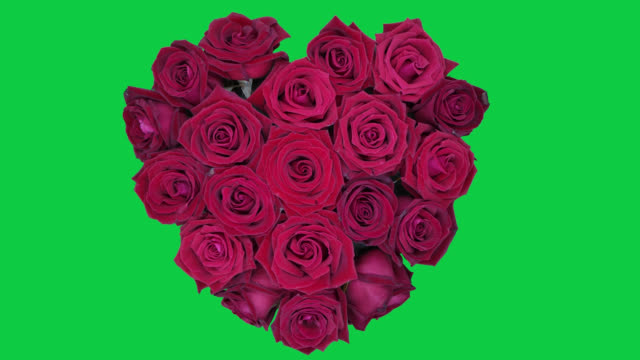 time lapse of heart shaped roses wither in green screen background, abstract theme - bouquet stock videos & royalty-free footage