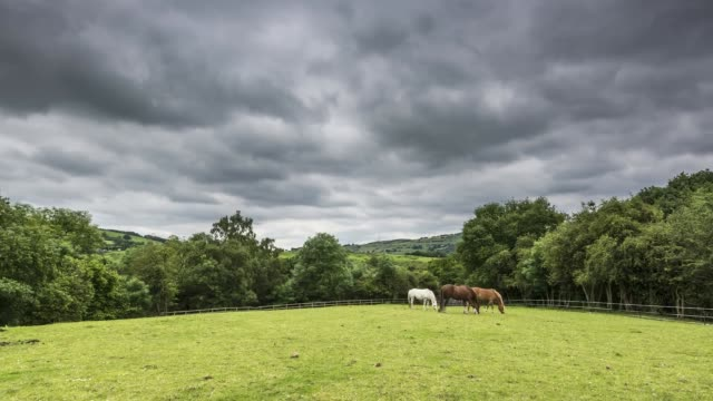 time lapse of horses grazing in the countryside - juni bildbanksvideor och videomaterial från bakom kulisserna