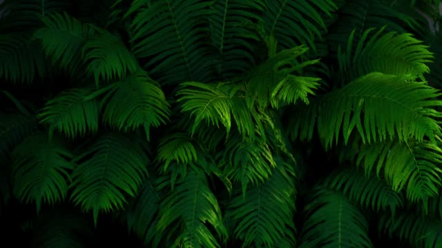 time lapse of lush foliage of the fern - fern stock videos & royalty-free footage