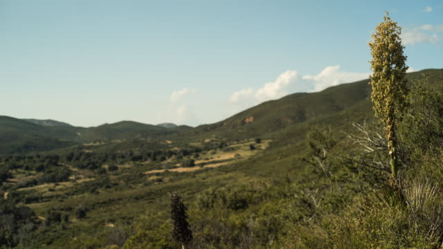 time lapse of meadow with clouds flowing in the distance in bostonia, san diego, california. shot on sony a7s locked down - pacific crest trail stock videos & royalty-free footage