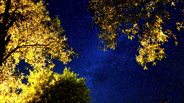 Time Lapse of Milky Way and Andromeda Galaxy beyond the Autumn Leaves.