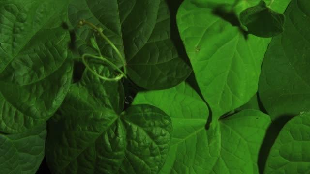 vídeos de stock, filmes e b-roll de lapso de tempo do movimento do padrão de folhas verdes - estampa de folha