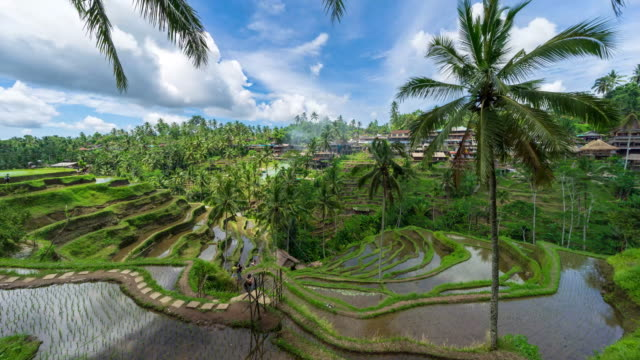 4k time lapse of moving clouds over beautiful rice terraces in ubud, bali. - ubud stock videos & royalty-free footage