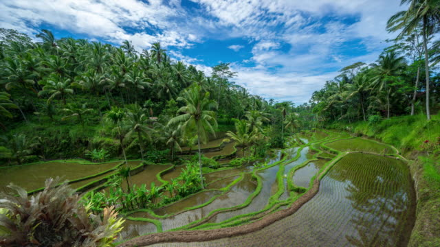4K Time lapse of moving clouds over beautiful rice terraces in Ubud, Bali.
